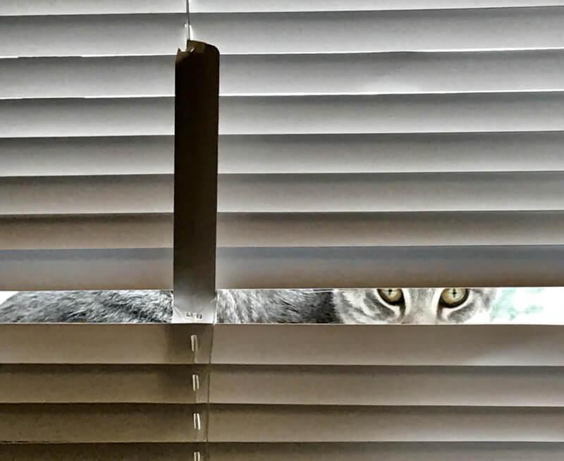 Cat has broken a blinds slat